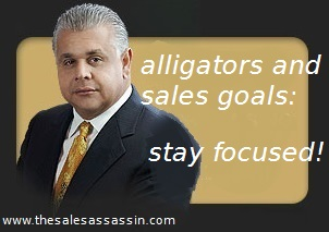 alligators and sales goals: stay focused